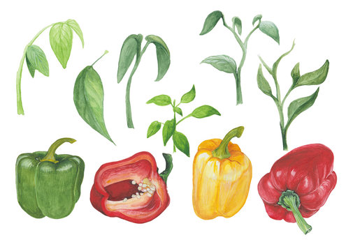 Peppers and greenery