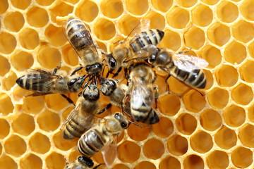 Bienenversammlung im Stock
