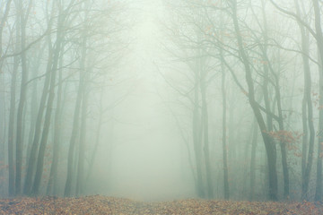 Artistic image of foggy forest with bare trees and fallen leaves with vintage glowing fade effect