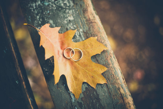 Two wedding rings on autumn yellow leaf on green wooden rustic background in the park. Close up.