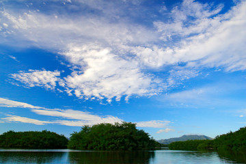 Caroni Swamp, green trees island with blue sky and white clouds, Trinidad and Tobago. Landscape in the Caribbean.