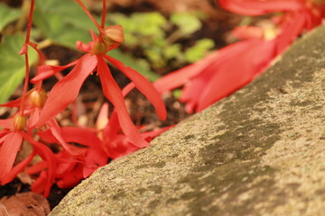 Red petals and rock