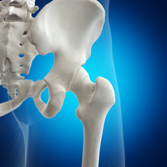 3d rendered medically accurate illustration of the hip joint