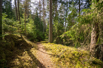 old road in forest in springtime