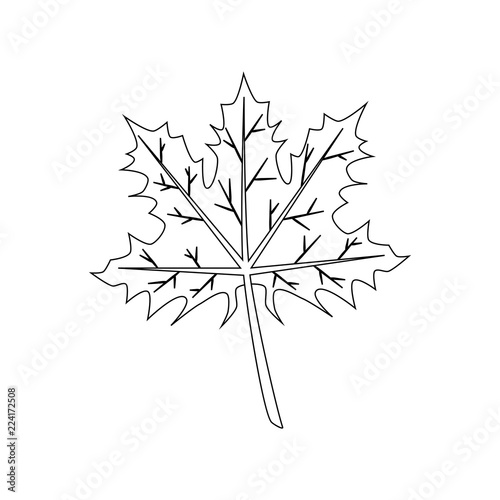 Maple Leaf Coloring Page Stock Image And Royalty Free Vector Files