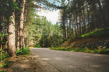 Mountain woodland and road