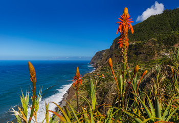 Flowers on coast in Boaventura - Madeira Portugal