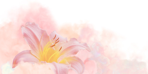Lily Flower Pink in the Waves of a Pink Gentle Fog.