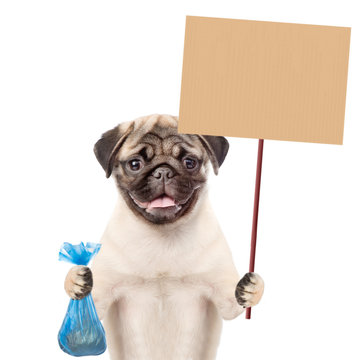 puppy holds plastic bag and placard. Concept cleaning up dog droppings. isolated on white background