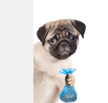Puppy holds plastic bag behind white banner. Concept cleaning up dog droppings. isolated on white background