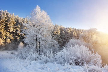 Beautiful winter nature in morning sunlight. Frosty trees and plants in winter scene. Wonderful clear sunny winter day. Christmas landscape. Frost and snow. Trees covered by hoarfrost