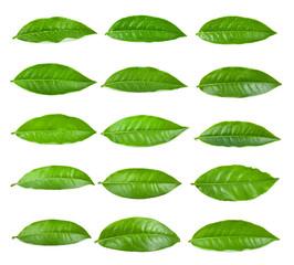 Papiers peints Condiment tea leaf on white background