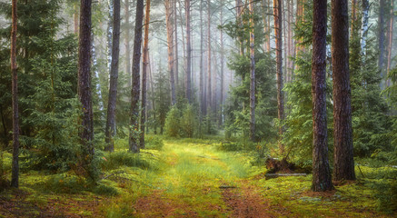Wall Murals Forest Nature green forest landscape