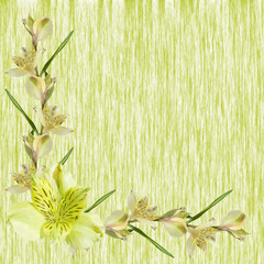 Beautiful floral background of yellow alstroemerias