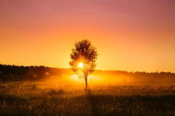 Sunset Sunrise In Misty Autumn Meadow Landscape With Lonely Tree