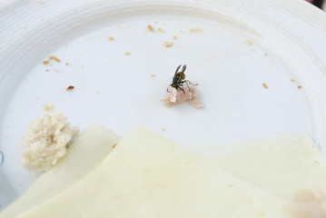 Wasp eating a piec of ham