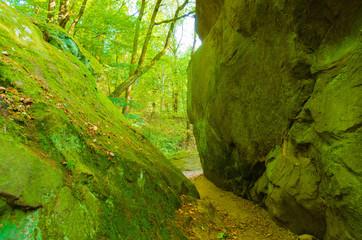 Moss on Rock in Ciężkowice, Poland