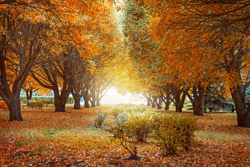 Golden autumn trees.  Autumn landscape with tree willows. Beautiful autumn park. Toned image