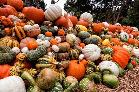 Fall Pumpkin Wall