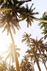 Background of tall palm trees and bright sky