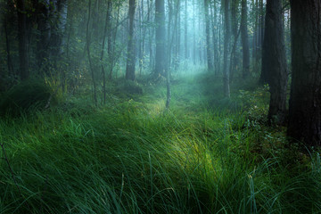 Misty swamp in forest during sunset.