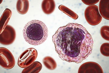 Lymphocyte (left) and monocyte (right) surrounded by red blood cells, 3D illustration