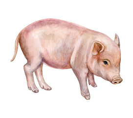 little piglet, pig isolated on white background. Watercolor. Illustration. Template. Close-up.