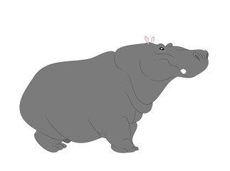 Hippopotamus stands drawing color, vector