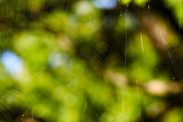 Spider's web in forest