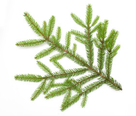 Beautiful Nature fresh green fir tree branch close up