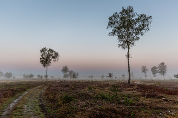 Sunrise with mist in a typical Dutch landscape of heather in a moorland field with solitary trees spread besides the pathway