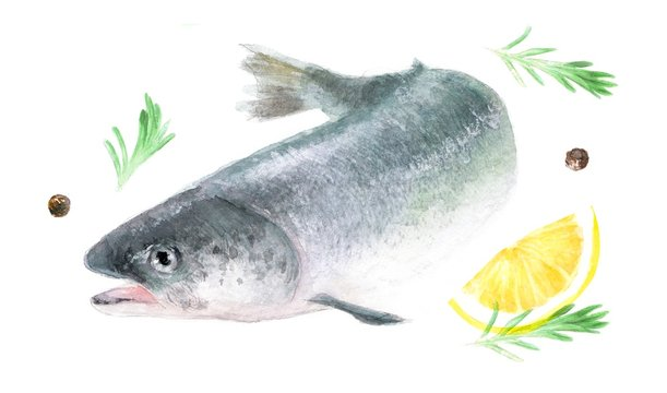 salmon, watercolor isolated illustration of seafood: fish and spices; salmon on white background, drawing drawn by hand