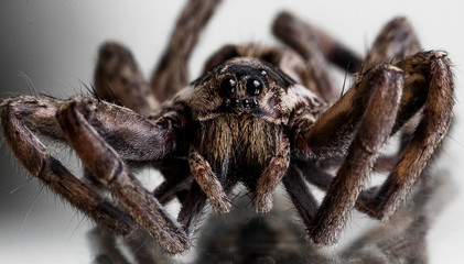 One spider close-up