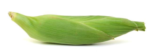 One single corn ear isolated on white background
