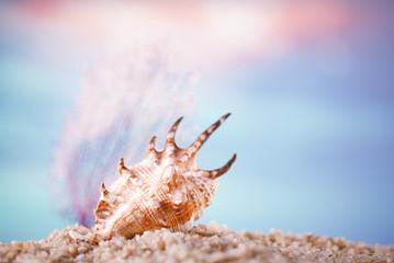 tropical seashell sea shell on sand with ocean