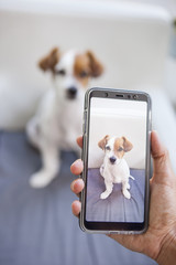 snapshot of a cute puppy with a smart phone