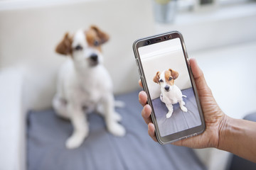 woman taking a picture of her dog with the phone