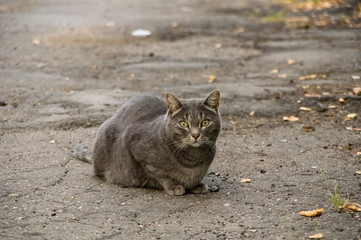 Cat sitting on the pavement in the fall