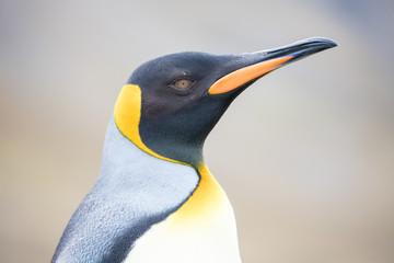Fotobehang Pinguin penguin in the arctic