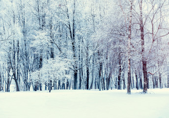 Winter forest landscape - forest trees covered with snow
