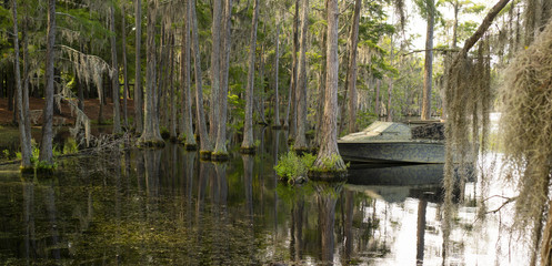 A Georgia State Swamp Lake has Abundant Cypress Trees Deep South