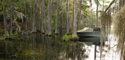 A Georgia State Swamp Lake has Abundant Cypress Trees Deep South