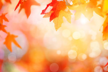 Colorful autumn sunset background  Wall mural