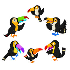 the collection of black toucan with the different posing