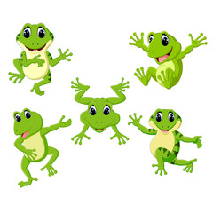 the collection of the beautiful green frog in the different posing