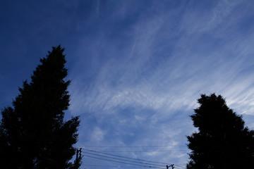 薄曇りの空といちょうの木