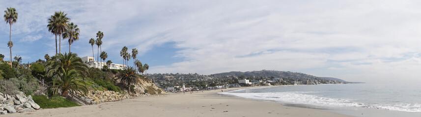 Palm trees at Laguna Beach