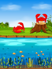 the natural view with the red crab on the grass and a big river infront of it