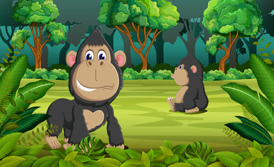 the forest background with two gorilla playing and sitting there