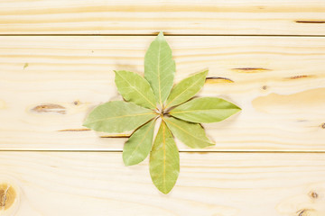 Group of eight whole dry olive green bay laurel leaves folded in a flower flatlay on natural wood